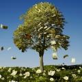Prosperita Specialty Blend - Prosperity