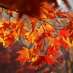 Foglie Cadenti - Falling Leaves