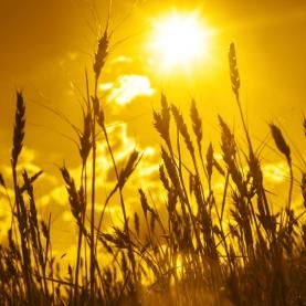 Raccolto e Abbondanza - Harvest and Abundance