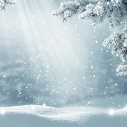Neve Sacro Specialty Blend