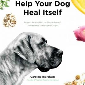 Help You Dog Heal Itself