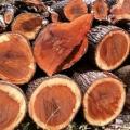 Buddha Wood CO2 Extract