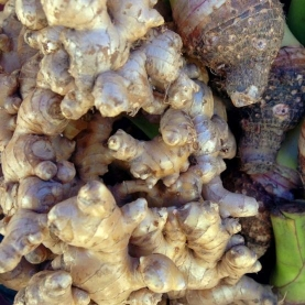 Ginger Co2 Total Extract India