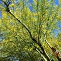 Palo Verde Flower Essence
