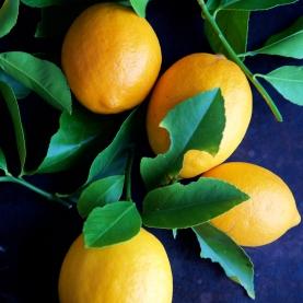 Lemon , Meyer Organic Hydrosol