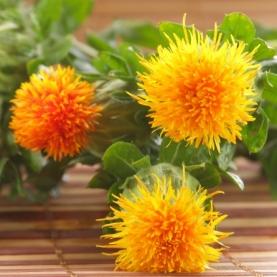 Safflower Oil - Organic