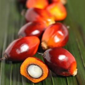 Palm Kernel Oil (Organic, Unrefined)