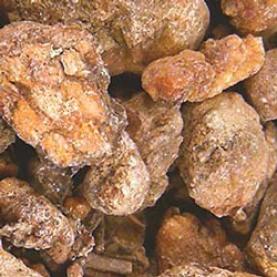 Pinon Pine Resin