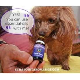 ALMOST FREE - Introduction to Pets, Essential Oils, Herbal Remedies, Energetics Mini Course