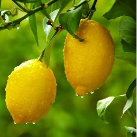 Lemon Essence Essential Oil