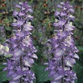 Clary Sage Essential Oil - France