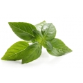 Exotic Basil Crafting & Cleaning Essential Oil