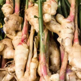 Ginger Essential Oil, Dried Root
