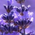 Flower Power Hydrosol Kit
