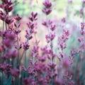 Love of Lavender Kit