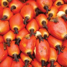 Palm Kernel Oil (Organic, Refined)